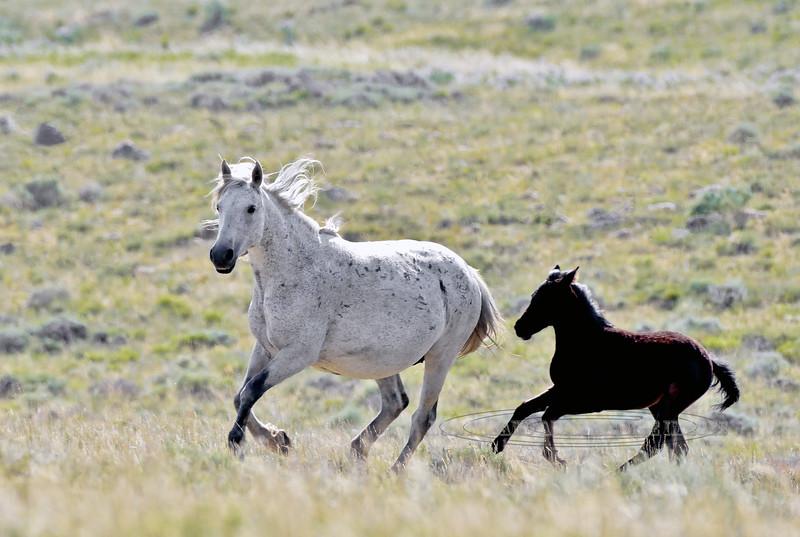 Wild Horse,'s 2018.7.7#2141. Wyoming.