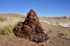 AZ-2017.10.11#1095. Petrified Wood. Petrified Forest Park, Arizona.