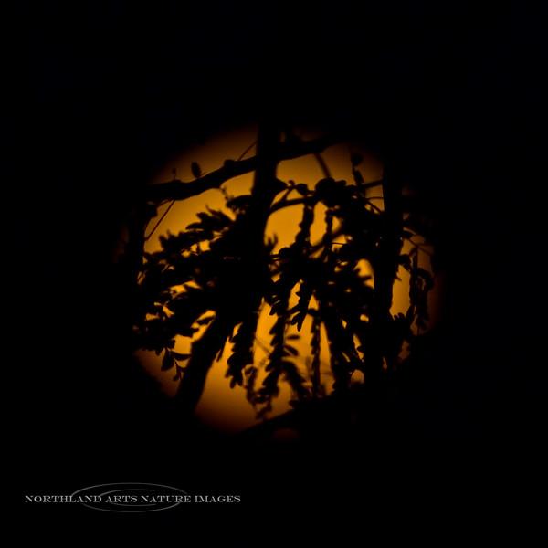 2020.10.31#5675.3. The Halloween Blue Moon setting in Prescott Valley Arizona.