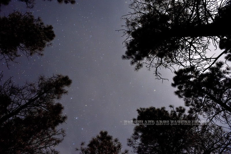 AZ-Stars above the Pondorosa Pines. Kaibab Forest, Coconino County, Arizona. #1128.114.