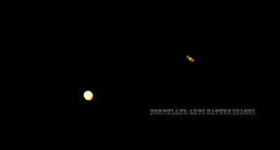 """AZ-2020.12.21#6225.3. """"The Great Conjunction"""" of Jupiter and Saturn. This year is the first time since the year 1226 that Jupiter and Saturn have been this close, 794 years ago. I was disappointed at first in this image but considering Jupiter is 556  million miles away from Earth and Saturn is a full Billion miles away, I guess not too bad an image. And I shot it with my conventional Nikon 200mm to 500mm lens on a D7200 body. Same equipment I use to shoot Birds and Sheep with. Viewed from Prescott Valley Arizona."""