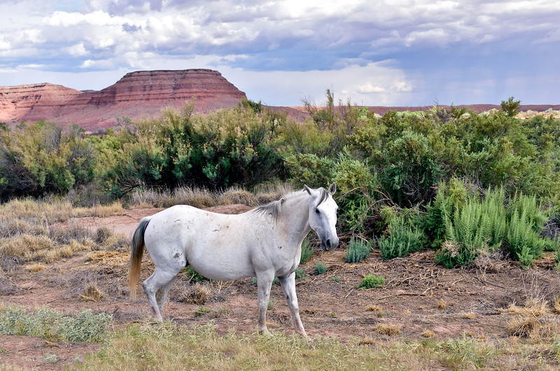 Wild Horse 2018.7.9#5891.5. In the Painted Desert on the Navajo Nation Arizona.