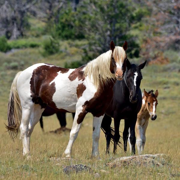 Wild Horse's 2018.7.7#2611. Wyoming.