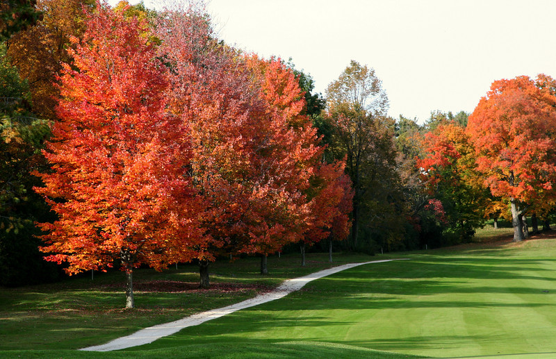 Cart Path in September