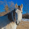 Pretty White/Gray Horse In Vermont