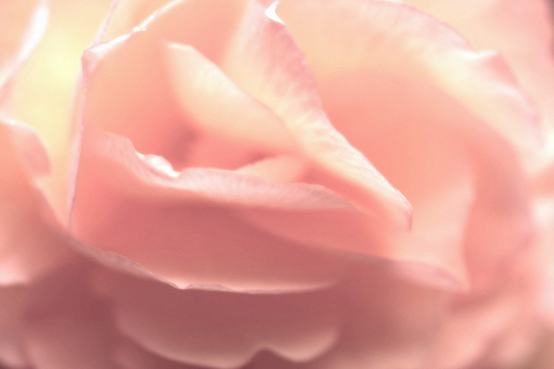 Pink Chiffon<br /> <br /> Maco of Tuberous begonia petals - I used Nik Color Efex Pro to soften & add grain