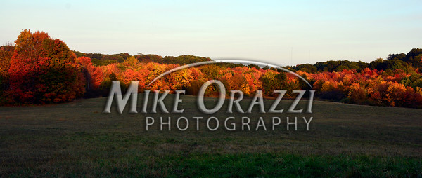 10/18/2016 Mike Orazzi | Staff Fall color at Nelson's Field in Bristol late Tuesday afternoon.