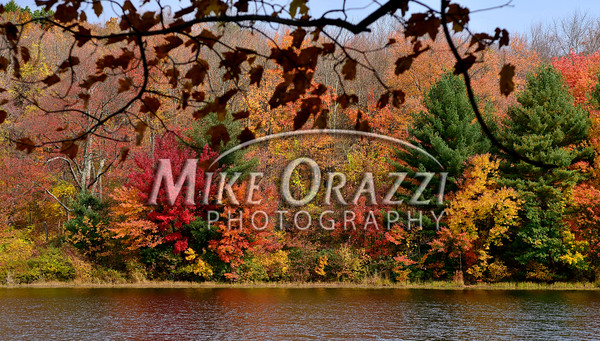 10/20/2016 Mike Orazzi   Staff Festa Forest Hiking Trails at the Plymouth Reservoir Thursday.