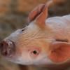 Little Wilbur <br /> Image By J. Ogilvie