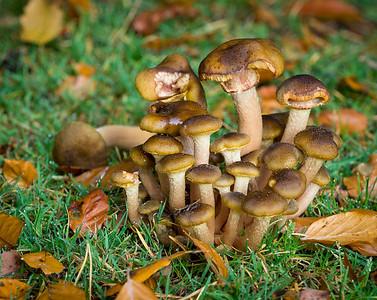 Fungi Oakley Inclosure