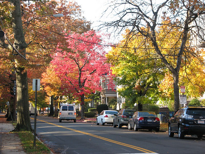 New Haven Fall Trees