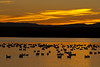 Sunrise at Bosque del Apache <br /> Bosque del Apache NWR, New Mexico