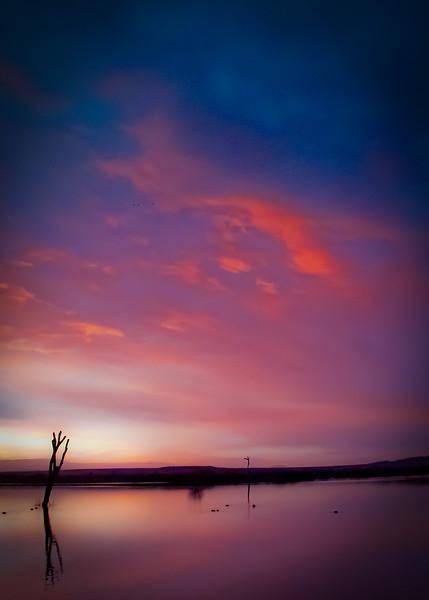 Dreamscape at Sunrise<br /> Bosque del Apache NWR, New Mexico