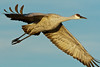 Beauty In Motion<br /> Bosque del Apache NWR, New Mexico