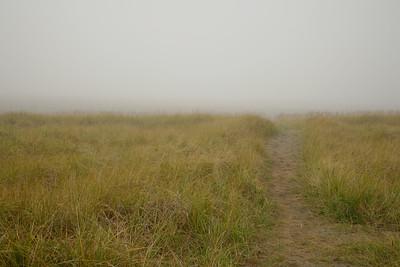 Beach Trail in Fog,  Long Beach, Washington