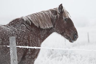 Horse  in Heavy Fog_