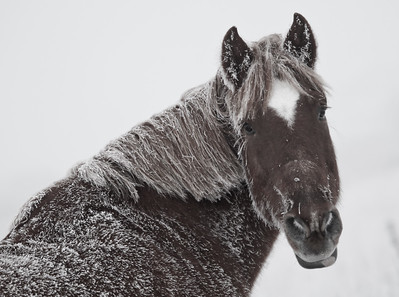 Horse  in Heavy Fog_-2