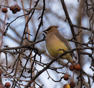 New Year's Day Birds- Central Park