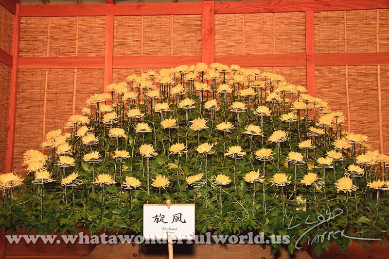 Kiku: The art of the Japanese Chrysanthemum