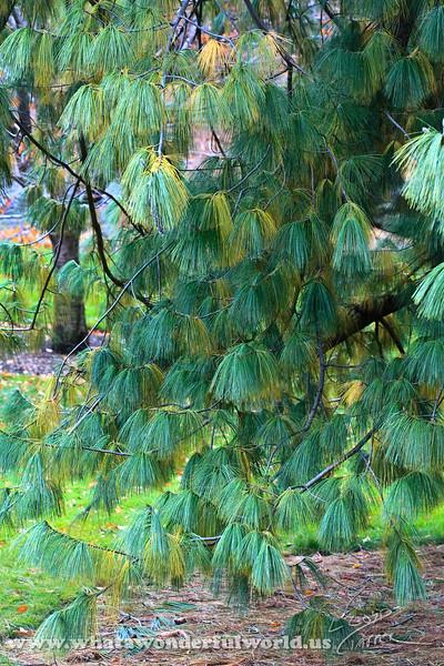 New York Botanical Gardens - Nov 2008