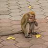 Hamster monkey