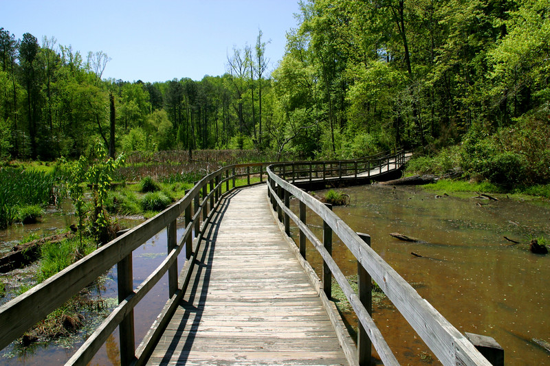 When the path heads to the woods, the boardwalk will give way to a nice gravel path.