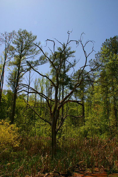 I love the twists and turns of the branches of this dead tree!