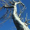 Icey tree