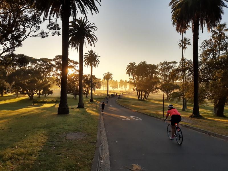 Centennial Park fog