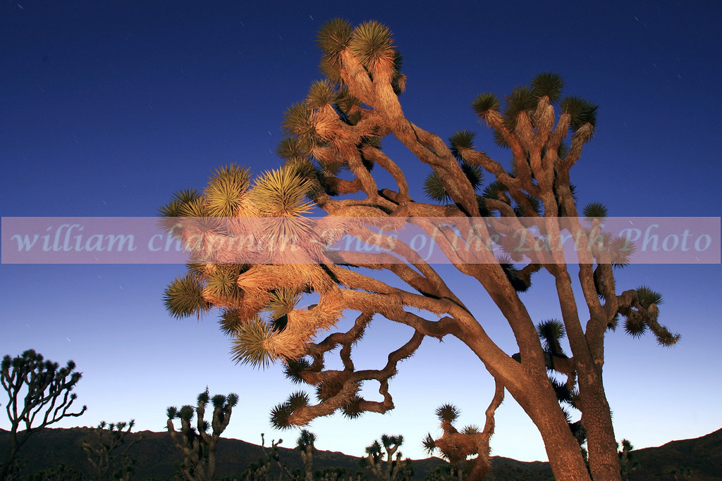 Joshua Tree Sunset 1