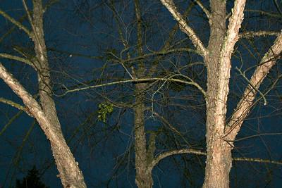 Winter trees at night 001