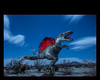 Dinosaur under the night sky