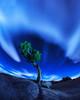 Joshua Tree night_20x16