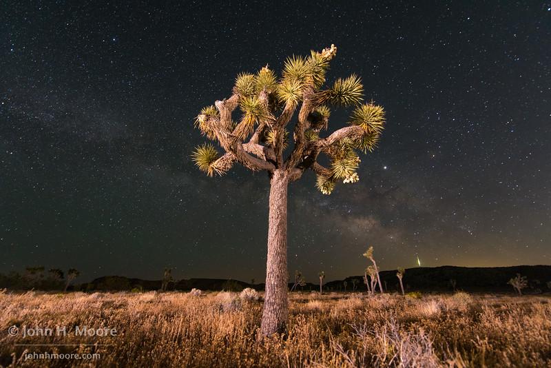A meteor streaks below the Milky Way in Joshua Tree National Park at night