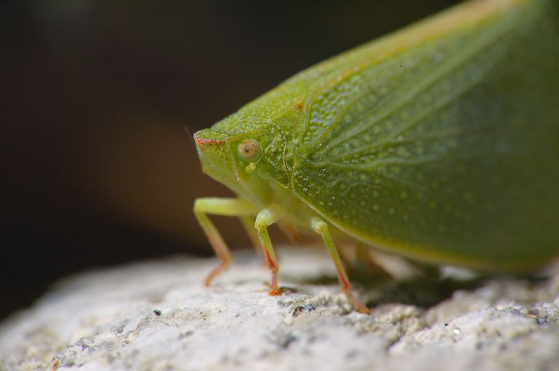 Green bug ;-)