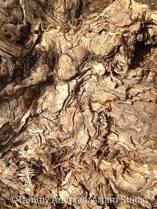 redwood burl, Belmont