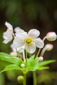 Nonnative Plants