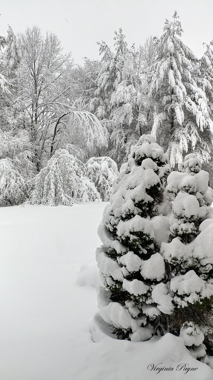 Photo taken again from our front door - 3/8/18