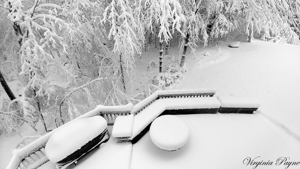 Photo taken from upstairs window in our bedroom - 3/8/18