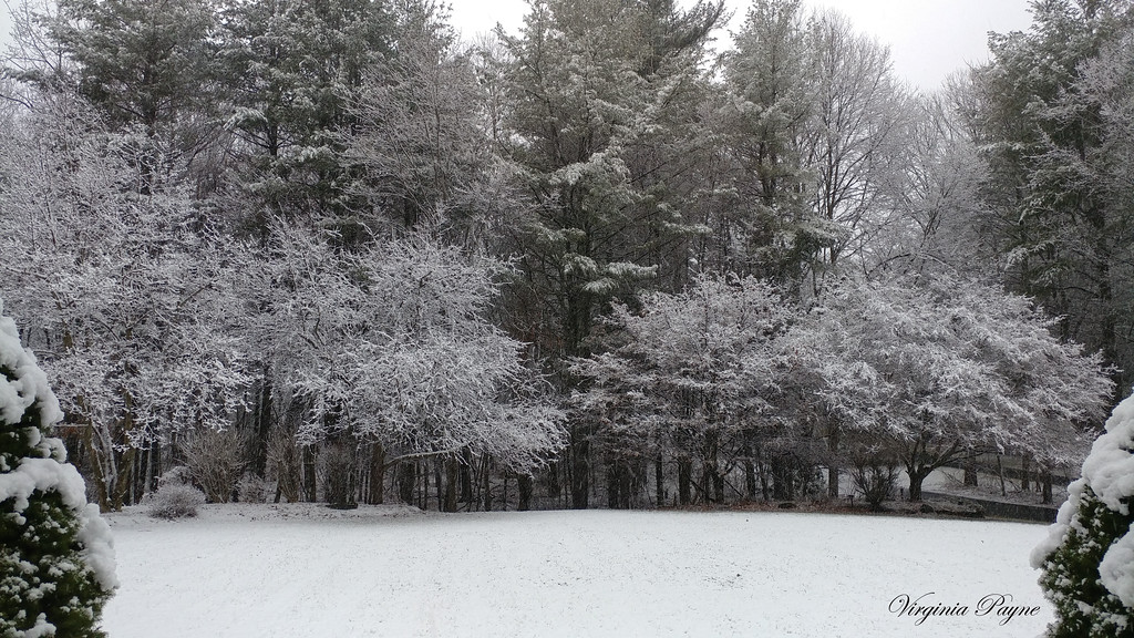 The beginning of the nor'easter on 3/7 afternoon - taken from our front door.