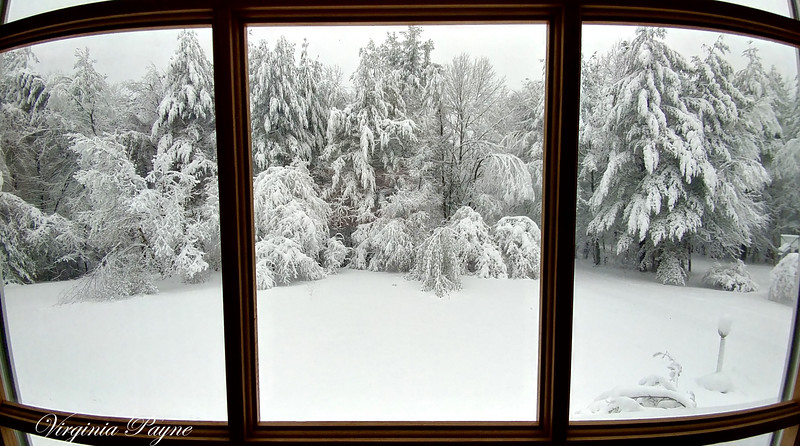 "A ""View from the window"" - 3/8/18."