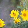 Flowers, Floral, Nature, Scenery, Scenic, roses, rose, botany, botanical, garden