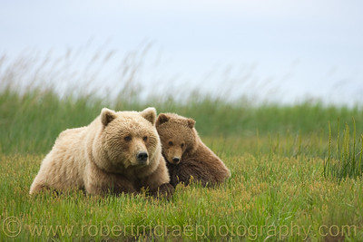 """Alaskan Brown Bear and Cub"" - Multiple Award Winner"