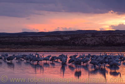 """Sandhill Cranes at Sunset"""