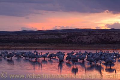 """Sandhill Cranes at Sunset"""
