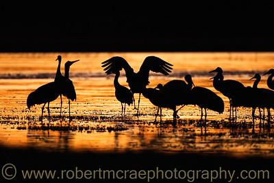 """Sandhill Crane Sunset"""