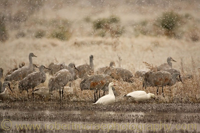 """""""Cranes and Geese in the Snow"""""""