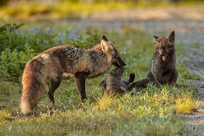 """Fox Family Interaction"""