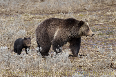 """Sow and Cub at Indian Pond"""