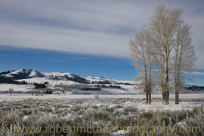 """The Lamar Valley"" - Award Winner"